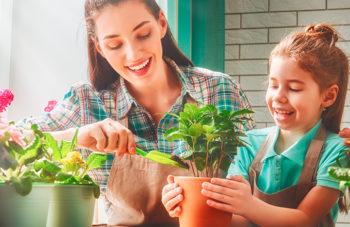 Como fazer seu jardim ficar lindo
